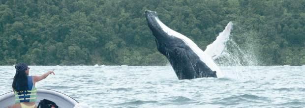 ballenas en el pacifico colombiano